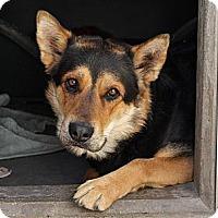Adopt A Pet :: DENNY - Valley Village, CA