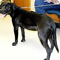 Adopt A Pet :: Faith - Washington Court House, OH