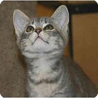 Adopt A Pet :: Love Bug - Irvine, CA