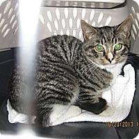 Adopt A Pet :: Esmerelda - West Dundee, IL