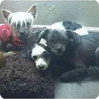 Adopt A Pet :: JUNE BUG - SCOTTSDALE, AZ