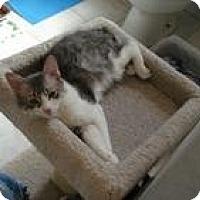 Adopt A Pet :: Summer - Raritan, NJ