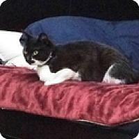 Adopt A Pet :: Katy - Vancouver, BC