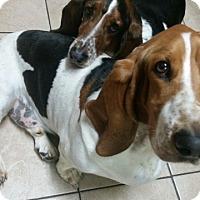 Adopt A Pet :: Donner - Northport, AL