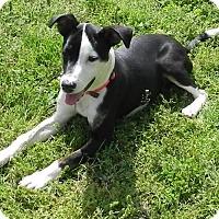 Adopt A Pet :: Patsy Cline - Homewood, AL
