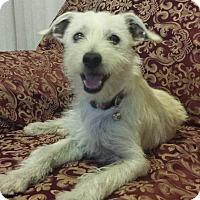 Adopt A Pet :: Guapo - Anaheim, CA