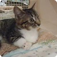Adopt A Pet :: Tessa - Riverside, RI