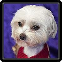 Adopt A Pet :: Obie - Costa Mesa, CA