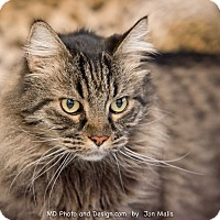 Adopt A Pet :: Rockey - Fountain Hills, AZ