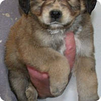 Adopt A Pet :: HANNA - Corona, CA