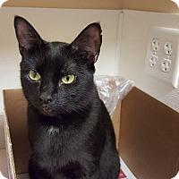 Adopt A Pet :: Winnie - Scituate, MA