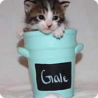 Adopt A Pet :: Gale - Fredericksburg, VA