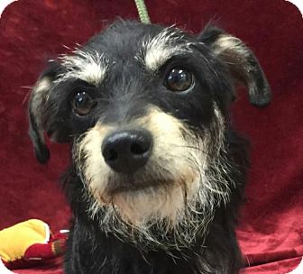 Terrier (Unknown Type, Small) Mix Dog for adoption in Harrisonburg, Virginia - Princess