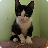 Adopt A Pet :: Angel - Southington, CT