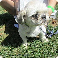 Adopt A Pet :: Gus - Aurora, IL