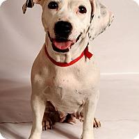 Adopt A Pet :: Charlotte Bullassett - St. Louis, MO