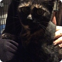 Adopt A Pet :: Maggie - Mt Pleasant, PA