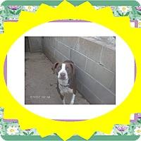 Adopt A Pet :: LIZZY - KELLYVILLE, OK