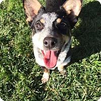 Adopt A Pet :: Sheila - San Diego, CA