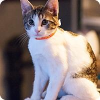 Adopt A Pet :: Perrin - Faribault, MN