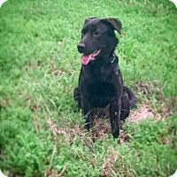 Adopt A Pet :: Francesca - Houston, TX