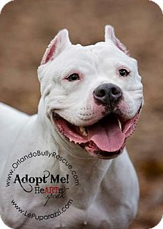 American Pit Bull Terrier Mix Dog for adoption in Orlando, Florida - Sky