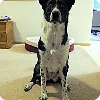 Adopt A Pet :: Holly - Wasilla, AK