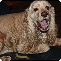 Adopt A Pet :: Annie - Tacoma, WA