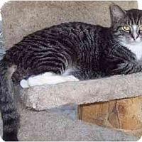 Adopt A Pet :: Buddy - Delmont, PA
