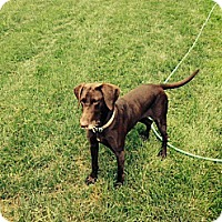 Adopt A Pet :: Maggie - Streetsboro, OH