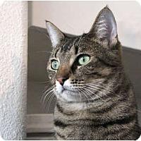 Adopt A Pet :: Amelia - Los Angeles, CA