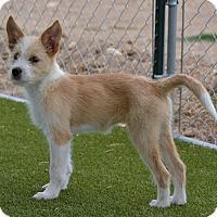 Adopt A Pet :: Sierra - Meridian, ID
