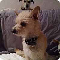 Adopt A Pet :: Cassie - Simi Valley, CA