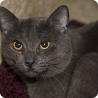 Adopt A Pet :: Nicholas - Lombard, IL