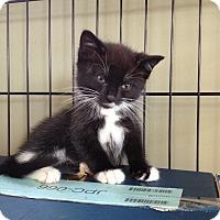 Adopt A Pet :: Tater - Island Park, NY