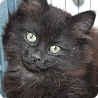 Adopt A Pet :: Pecan - Caistor Centre, ON