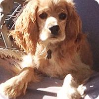 Adopt A Pet :: Raymond - Santa Barbara, CA
