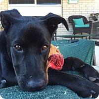 Adopt A Pet :: Covey - Austin, TX