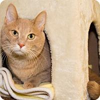 Adopt A Pet :: Zorro - Seville, OH