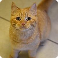 Adopt A Pet :: Parcheesi - DFW Metroplex, TX