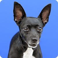 Adopt A Pet :: GYPSY - LAFAYETTE, LA