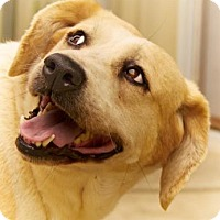 Adopt A Pet :: Zoe - Lincolnton, NC