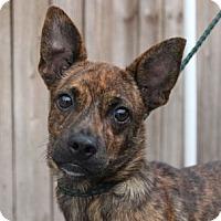 Adopt A Pet :: Scooby S - -A Celebrate Home Dog! Lower Fee! - Locust Fork, AL