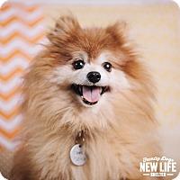 Adopt A Pet :: Samson - Portland, OR