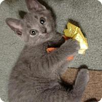 Adopt A Pet :: Geneva - Cincinnati, OH