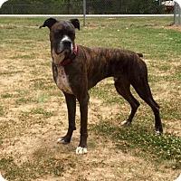 Adopt A Pet :: Otis - Jacksonville, AL