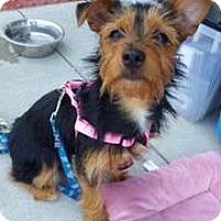 Adopt A Pet :: Daisy - Berea, OH