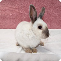 Adopt A Pet :: Smudge - Fountain Valley, CA