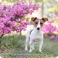 Adopt A Pet :: Sophie - Conyers, GA