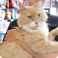 Adopt A Pet :: Wisconsin - Brooklyn, NY